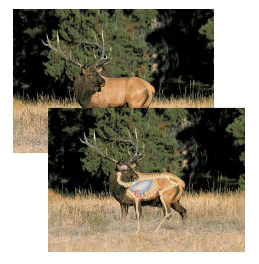 Perfect Shot North American Big-Game Targets-Elk