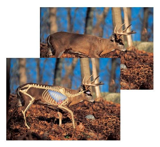Perfect Shot North American Big-Game Targets-Whitetail